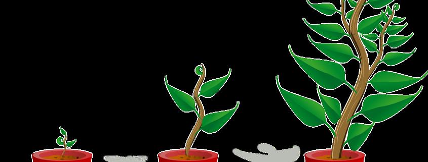 Taimesta kasvua